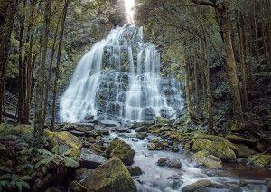Nelson Falls an der Westküste Tasmaniens