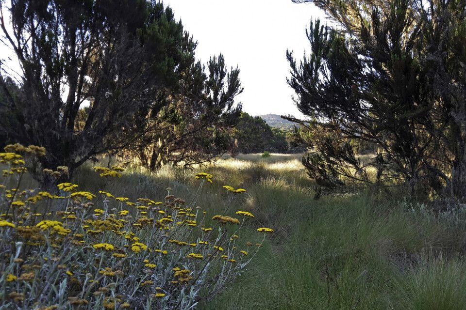 Nach dem Regenwald kommt die Heide- und Moorlandschaft