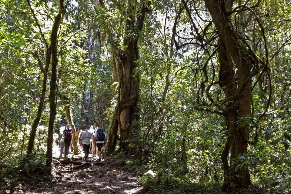 Die Marangu-Route führt über gute Wege