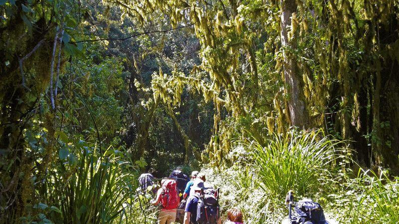 Üppige Vegetation im Regenwald entlang der Marangu-Route © Diamir