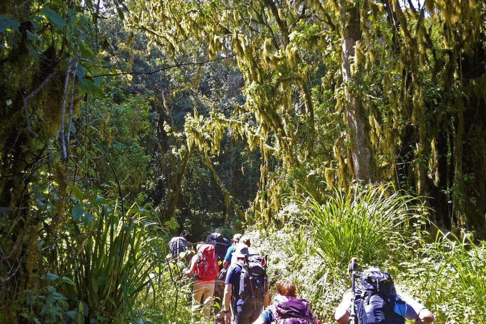 Üppige Vegetation im Regenwald entlang der Marangu-Route
