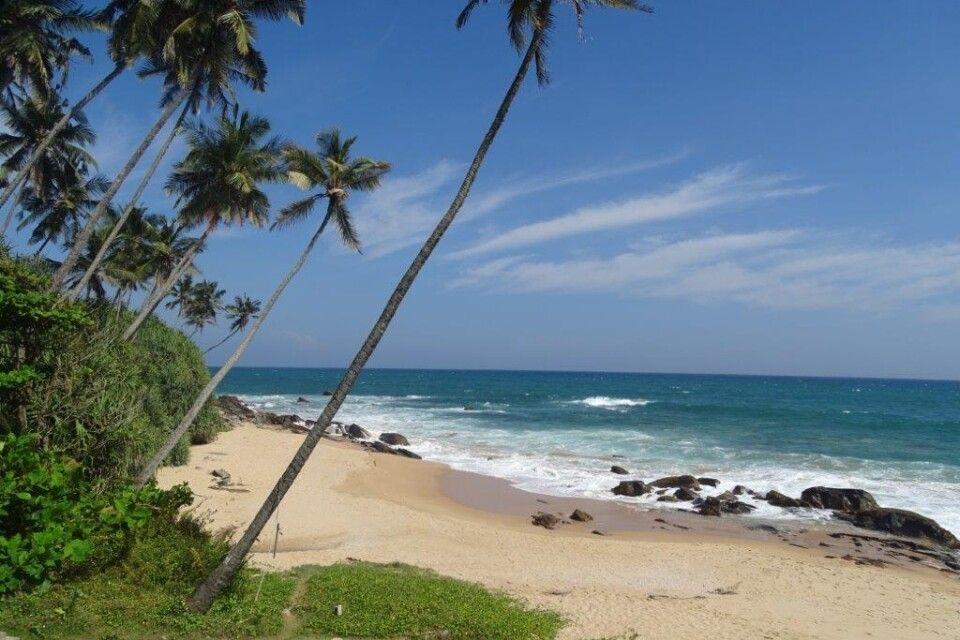 Strandfoto Sri Lanka (um Mirissa)