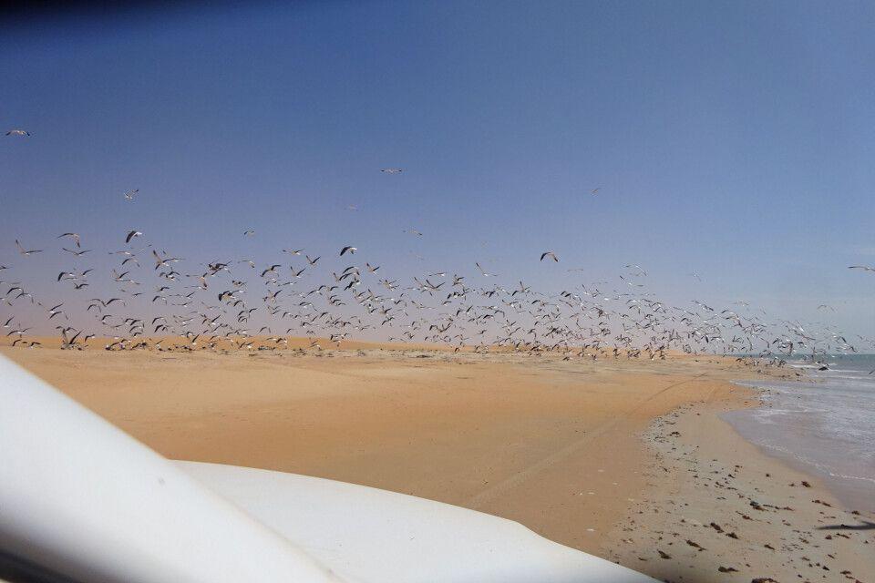 Vogelschwarm an der Küste Mauretaniens