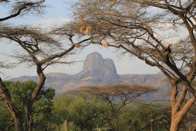 Schirmakazien und Webervögelnester – typisch Afrika!