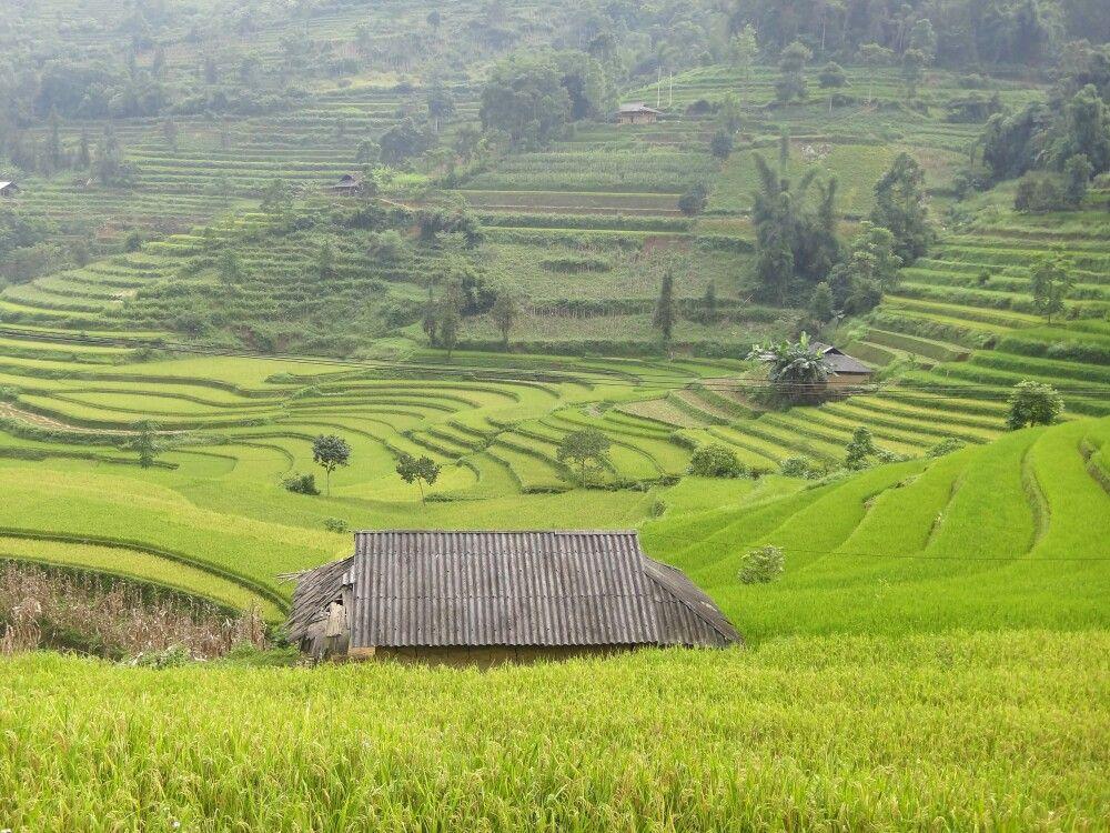 Reisfelder in der Nähe von Sapa
