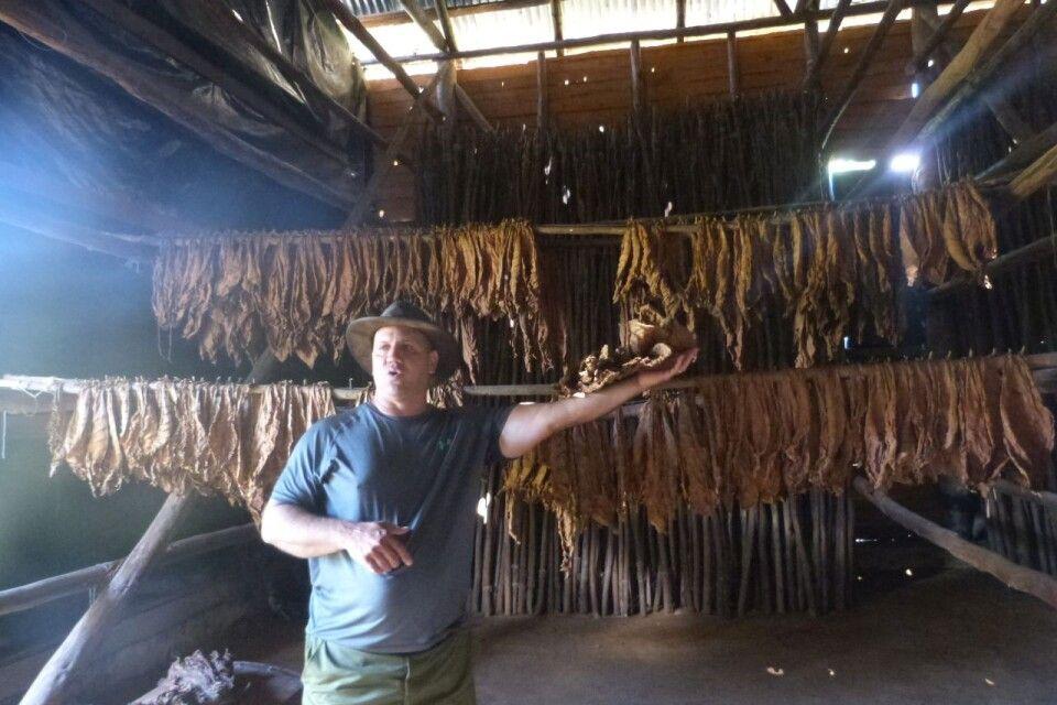 Erklärung zur Verarbeitung von Tabak auf einer Tabakplantage