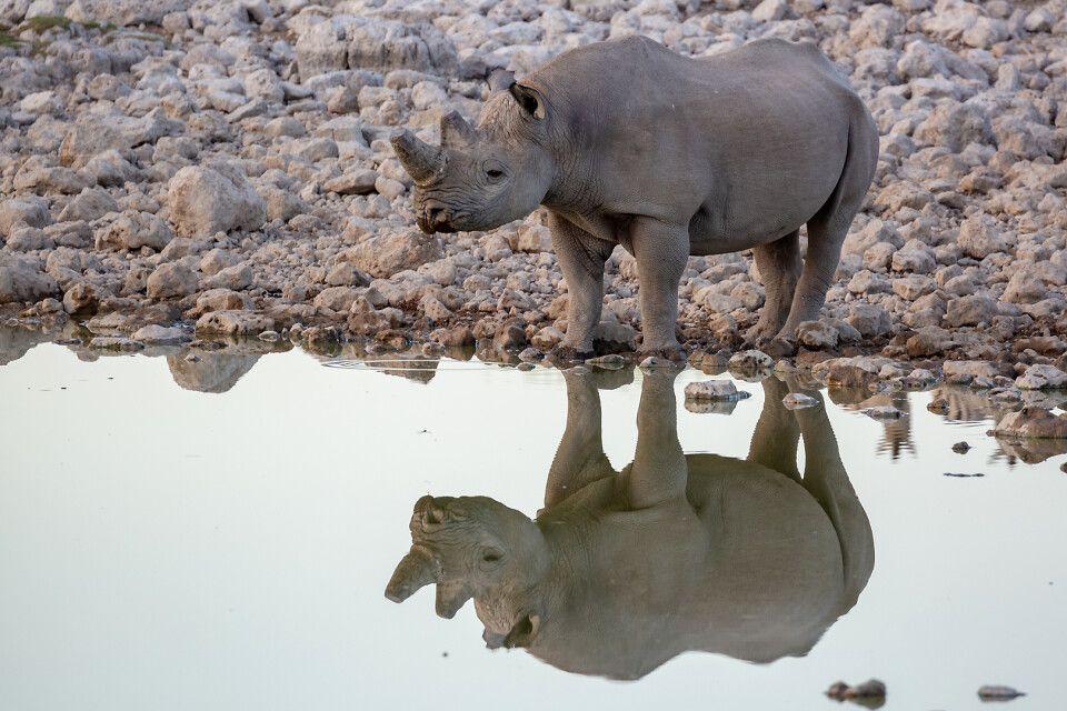 An der Wasserstelle im Etosha-Nationalpark