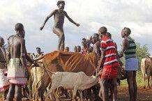 Rindersprung bei den Hamer