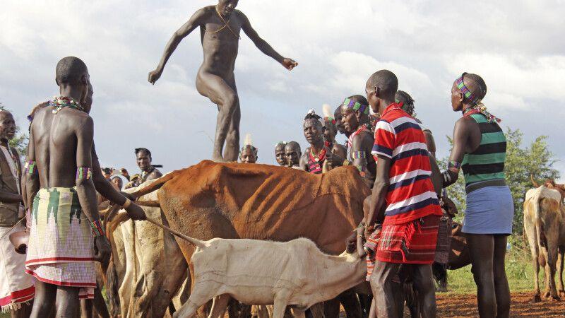 Rindersprung bei den Hamer © Diamir