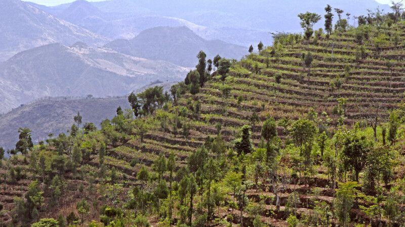 Terrassenfeldbau in Konso © Diamir