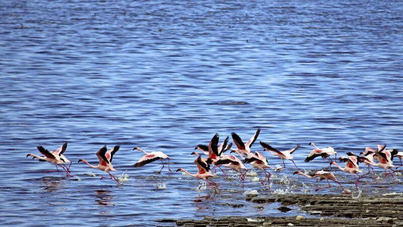 Flamingos am Shalla-See, Abiata-Shalla-Nationalpark © Diamir