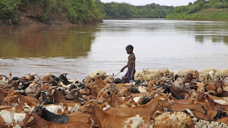 Ziegenherde am Omo-Fluss © Diamir
