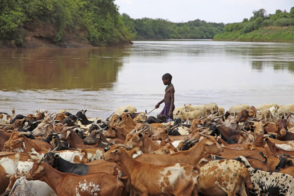 Ziegenherde am Omo-Fluss