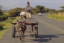Junge auf Eselskarren in Oromia