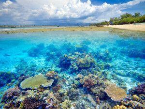 Korallenriff vor Gili Meno
