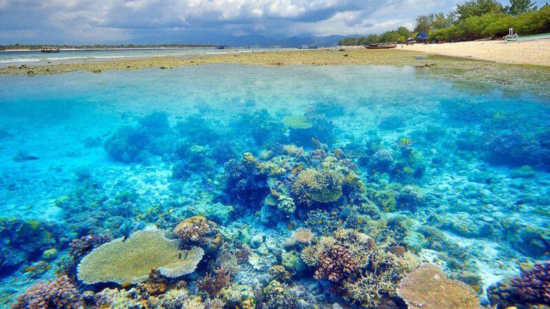 Korallenriff vor Gili Air © Diamir