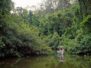Bootsfahrt auf dem Daintree River im gleichnamigen Nationalpark