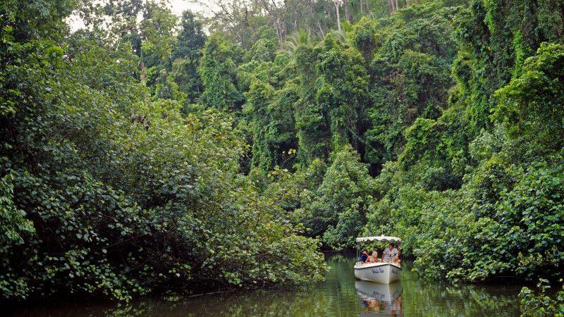 Bootsfahrt auf dem Daintree River im gleichnamigen Nationalpark © Diamir