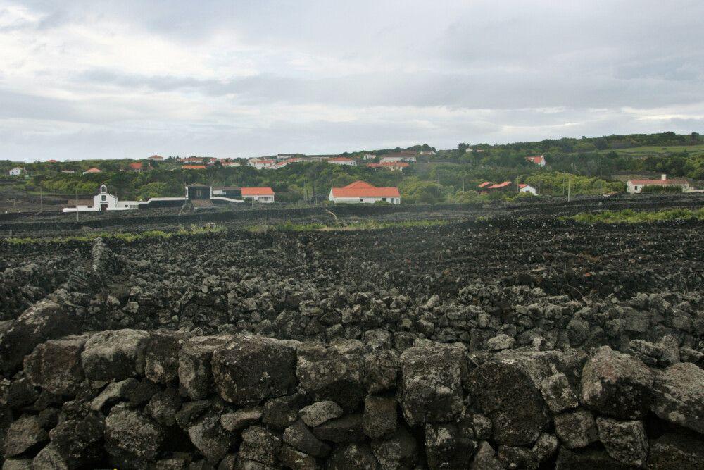 Die Weinfelder von Pico gehören zum UNESCO-Weltkulturerbe