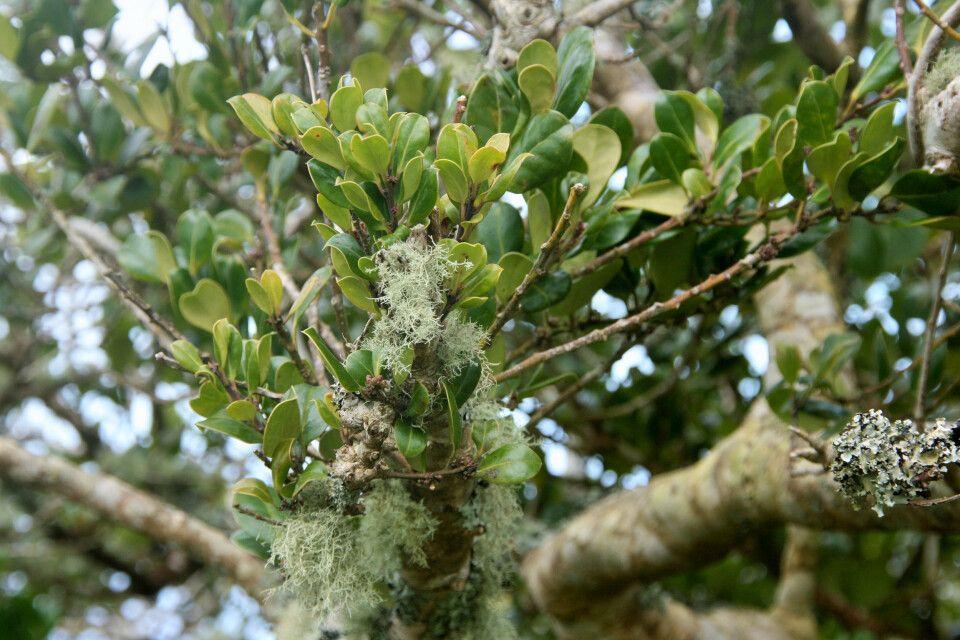 Die hohe Luftfeuchtigkeit bietet ideale Voraussetzungen für die Insel-Vegetation