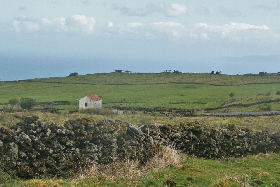 Blick über die Rinderweiden im Hochland von Pico