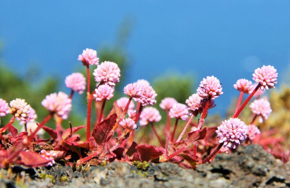 Kleine Blumen am Wegesrand
