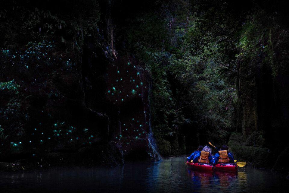 Tausende Glühwürmchen leuchten in der Nacht
