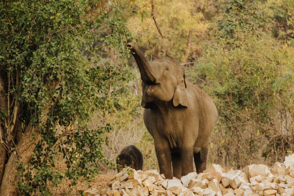 Pench, Tadoba-Nationalpark-Elefanten