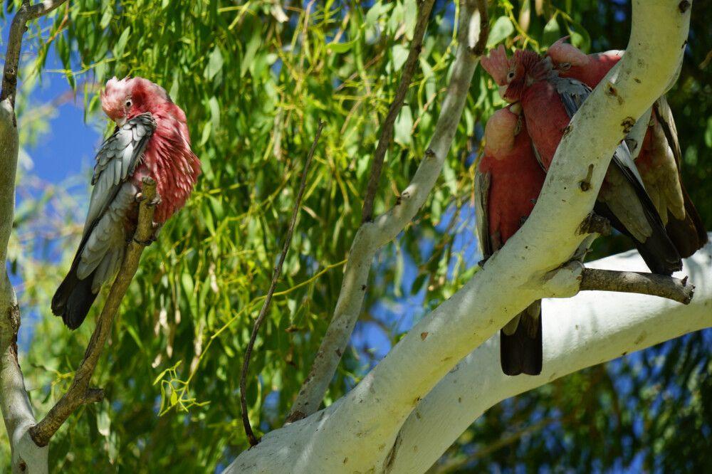 Die exotische Vogelwelt in den Bäumen ist nicht zu überhören.