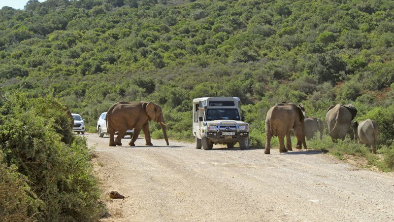 Elefanten im Addo-Elephant-Nationalpark © Diamir