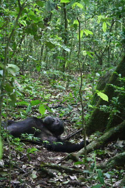 Begegnungen im Kibale Forest