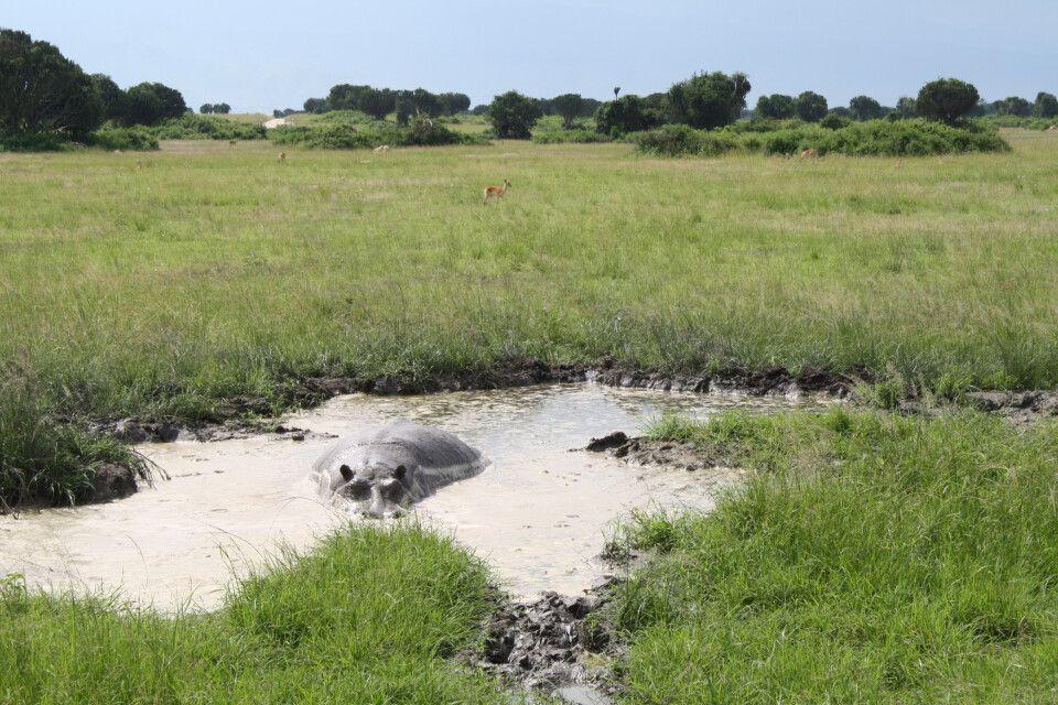 Hippo-Privatpool im Queen-Elizabeth-Nationalpark