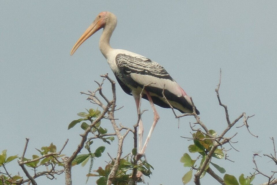 Besuch im Preak-Toal-Vogelschutzgebiet