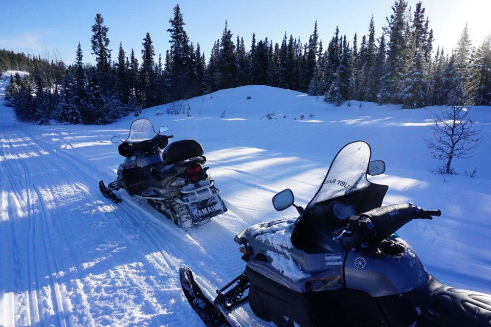 Rasante Snowmobil-Tour durch die endlosen Wälder