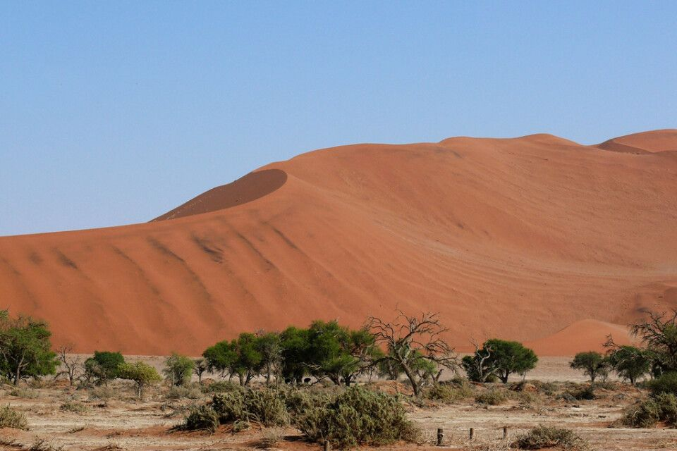 Im Sossusvlei befinden sich die höchsten Sanddünen der Welt