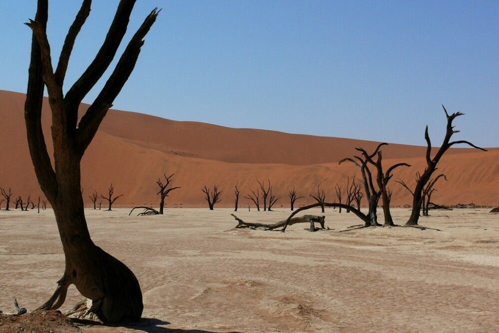 Das Deadvlei im Namib-Naukluft-Nationalpark