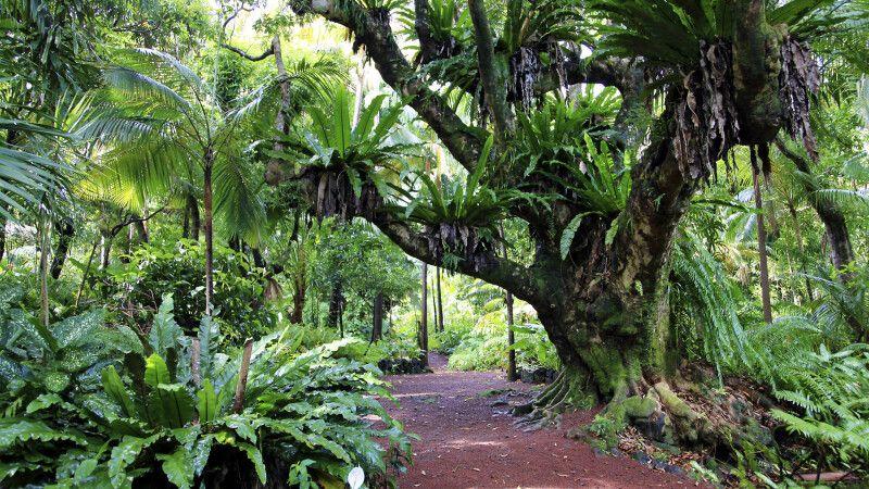 Tropischer Garten – Farnwald © Diamir