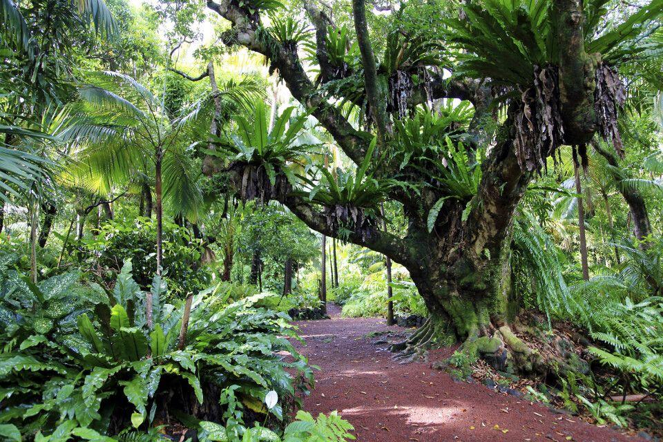 Tropischer Garten – Farnwald