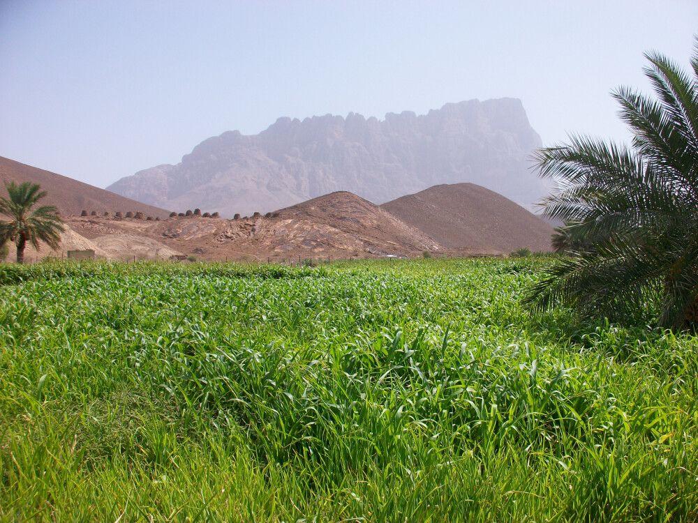 Jebel Mish bei Al Ayn