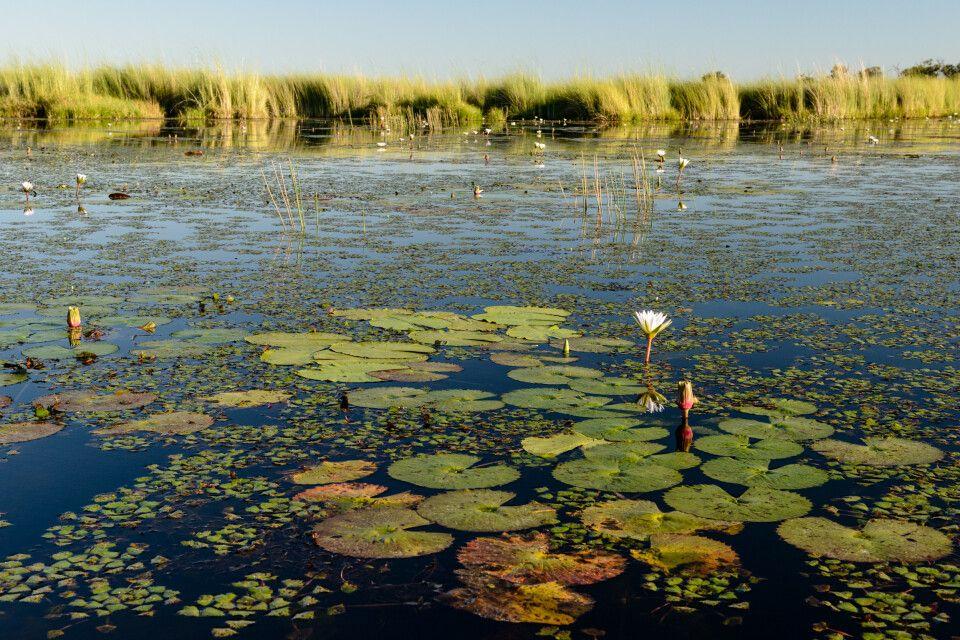 Landschaft am Xakanaxa Channel, Moremi Game Reserve, Okavango-Delta, Botswana