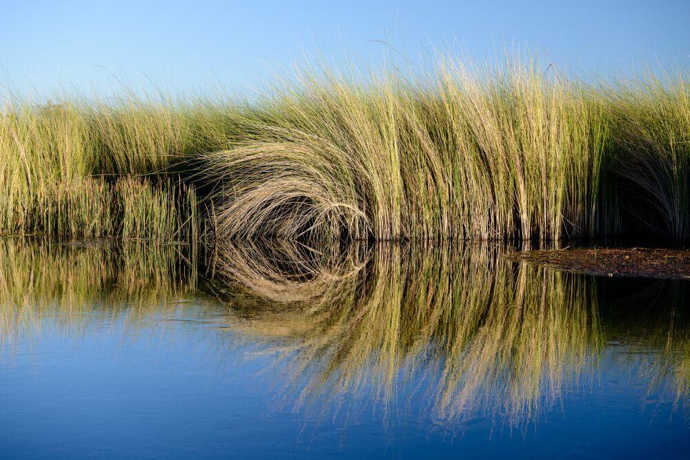 Spiegelungen auf dem Xakanaxa Channel, Moremi Game Reserve, Okavango-Delta, Botswana