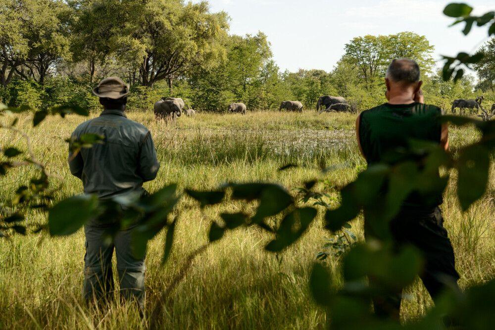 Elefanten kommen zum Trinken an den Wasserlauf direkt am Camp, Khwai Community Area, Okavango-Delta, Botswana