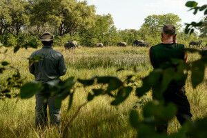 Hoher Besuch am Nachmittag: Eine Elefantenfamilie kommt zum Trinken an den Wasserlauf direkt am Camp.