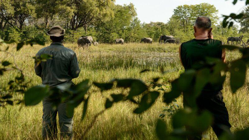 Elefanten kommen zum Trinken an den Wasserlauf direkt am Camp, Khwai Community Area, Okavango-Delta, Botswana © Diamir