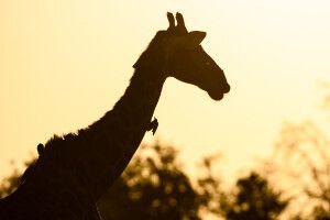 Auch Giraffenfütterungen sind auf Voigtland möglich