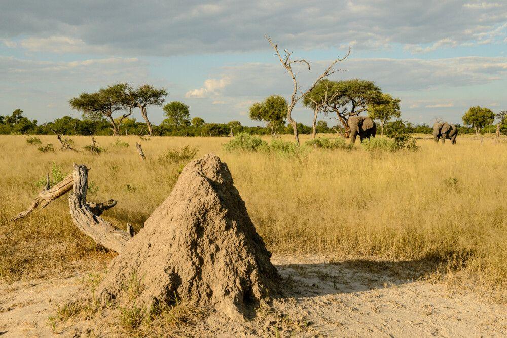 Landschaft in der Khwai Community Area, Okavango-Delta, Botswana