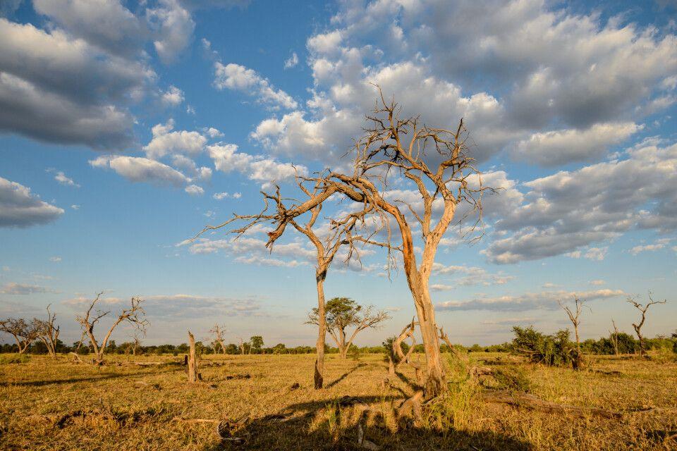 Schatten des Safarifahrzeugs im Abendlicht, Khwai Community Area, Okavango-Delta, Botswana
