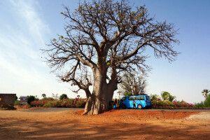unser Bus am Baobab-Baum