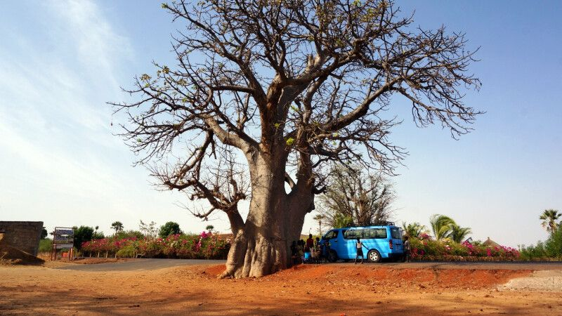 unser Bus am Baobab-Baum © Diamir