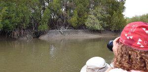 Krokodil am Gambia-Fluss